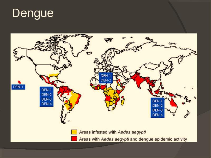 Последствия лихорадки Денге.Чем опасна данная болезнь?